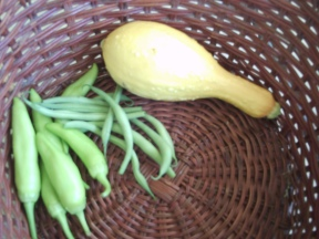 6/30 -- banana peppers, beans, squash